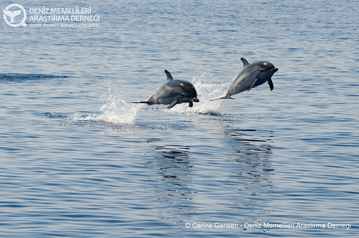 Dolphin watching - one of many great things to do in Montenegro.