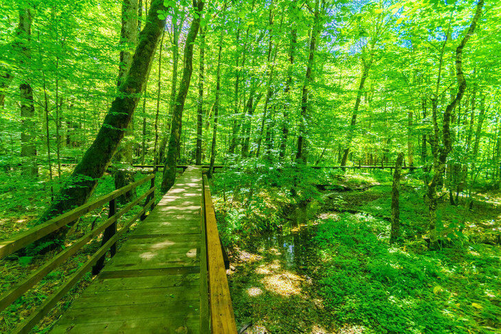 Discover Biogradska Gora National Park. Everything you need to know about visiting one of Europe's last virgin forests. What to do, where to stay, how to get there and much more!
