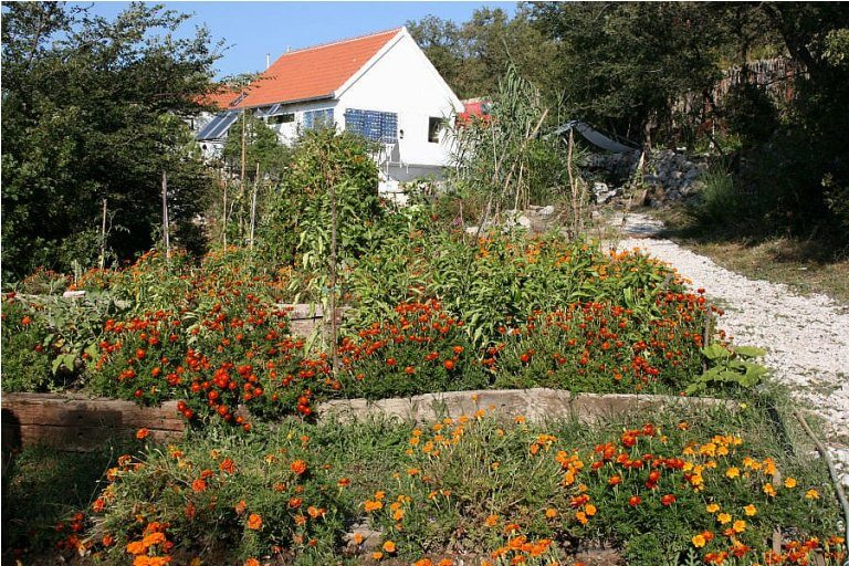Camp Full Monte organic garden