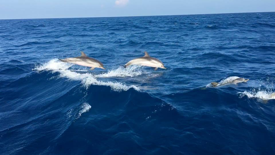 Getting up close with dolphins on a dolphin watching tour in Montenegro