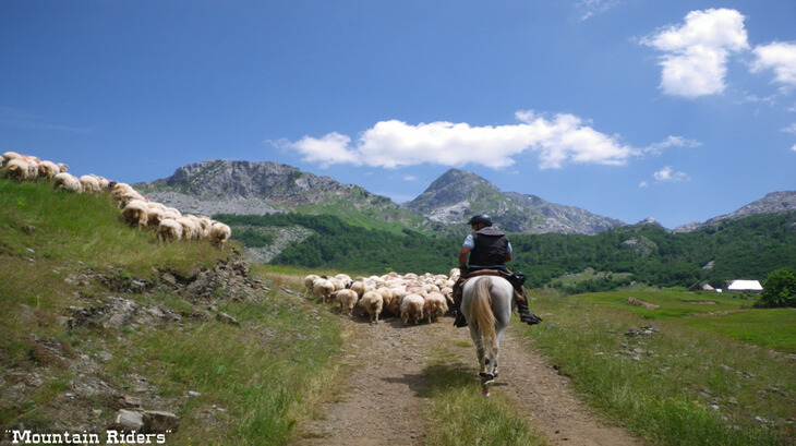 Horse trekking is one of the top things to do in Podgorica, Montenegro. Horse riding in Montenegro offers trail rides for beginners to experienced riders.