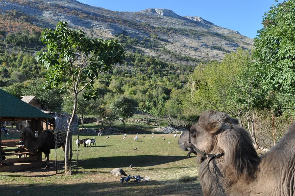 Montenegro Animal Sanctuary is one of Montenegro's top hidden gems and a great place for families.