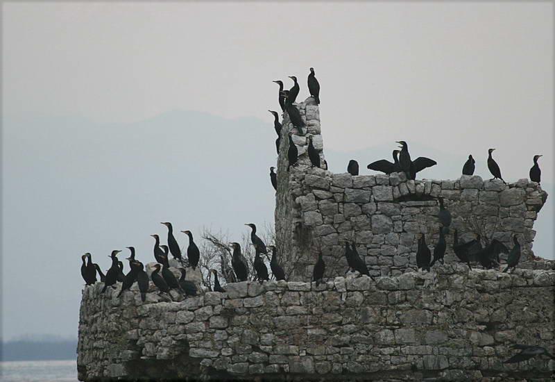 Lake Skadar Birds Grmozur Island