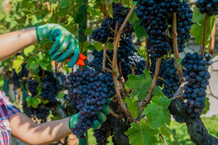 Wine tasting at Skadar Lake in Montenegro